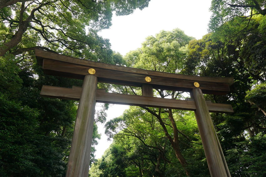 Architecture Built Structure Forest Green Color Nature Tree Wood - Material