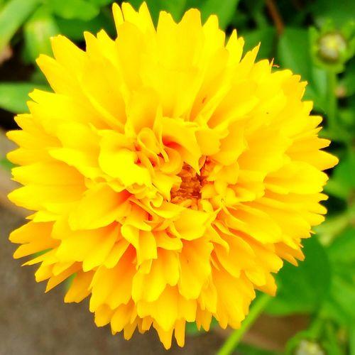 EyeEm Flowers Collection Flowers_collection Flowers, Nature And Beauty Eyem Flower_collection Eyem Flowers Walking Around Yellow Color Yellow Flower Yellowflower Turbury Woods
