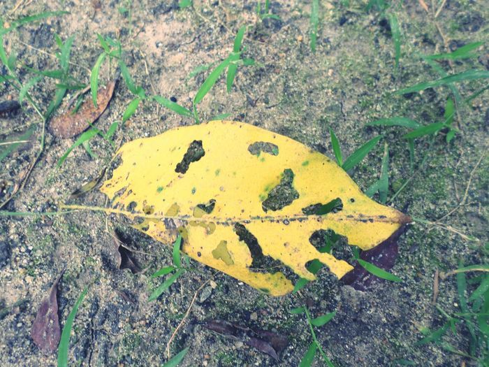 High angle view of yellow leaf on rock