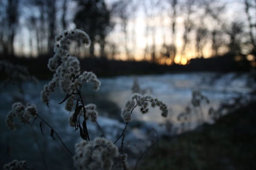 Nature Focus On Foreground Beauty In Nature No People Close-up Winter Outdoors Sunset Tranquility Cold Temperature Sky Day Plant
