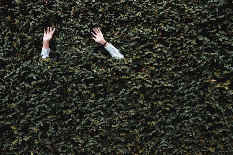 Hands in hedge