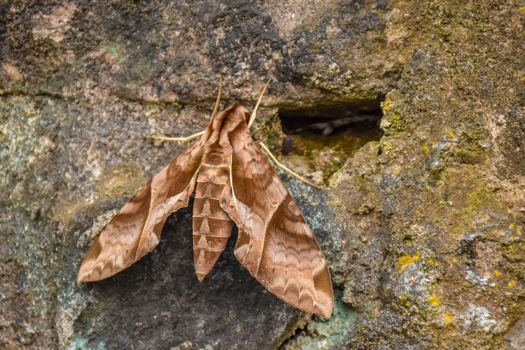 High angle view of dry leaves on rock