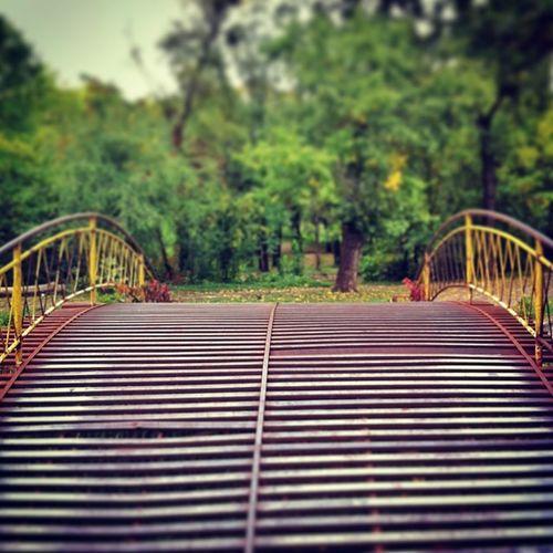 whose wicked idea was this? Dobrich Park Bulgaria Metal bridge autumn