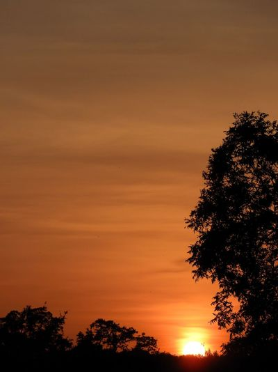 Second wave of Sahara dust sunsets Sunset Tree Sky Plant Silhouette Beauty In Nature Scenics - Nature Orange Color Tranquil Scene No People Nature Low Angle View Cloud - Sky Outdoors Dramatic Sky Idyllic Treetop