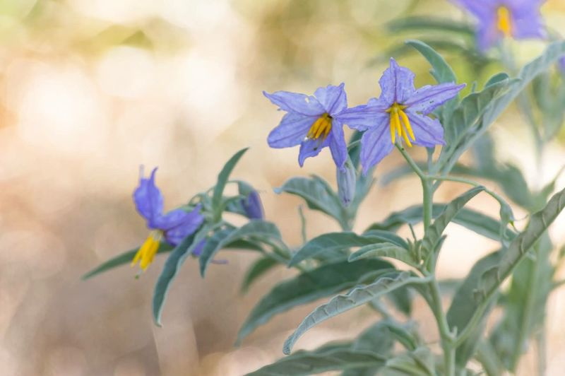 Purple Wildflowers Flower Fragility Petal Growth Nature Freshness Beauty In Nature Plant Flower Head No People Day Outdoors Close-up Leaf Blooming