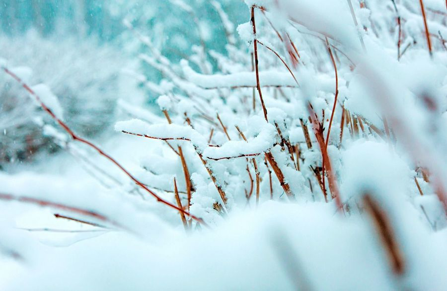 Frozen Lake Winter Cold Temperature Snow Weather Nature Tree Frozen Tranquility Outdoors No People Close-up Beauty In Nature Ice Growth Day Plant Branch