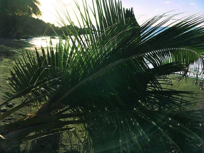 Palm Tree Sunlight Nature Outdoors No People Green Color Scenics Beauty In Nature Antilles Travel Destinations Peaceful Moment