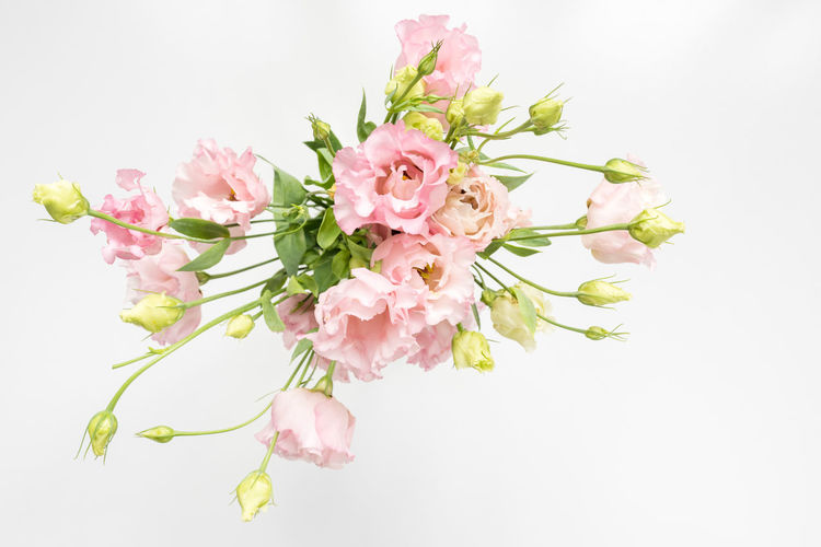High angle view of pink lisianthus flowers and cream buds in vase on white background (selective focus) High Angle Above Background Beauty Blooms Blossoms  Buds Closeup Decoration Delicate Directly Above Floral Flowers Fragile Green Lisianthus Natural Nature Pastel Petals Pink Simplicity Soft Spring Stems Top Top Down Top View White White Background Studio Shot Freshness Beauty In Nature Pink Color Vulnerability  Fragility Close-up Indoors  No People Inflorescence Flower Arrangement Bunch Of Flowers Bouquet