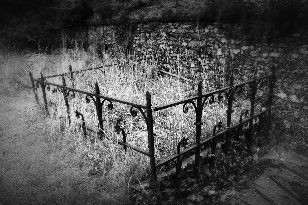 protection, grass, field, railing, day, outdoors, no people, nature, plant, barbed wire, growth, tree