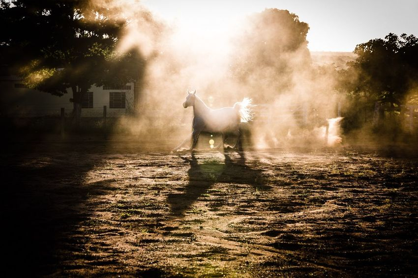 Horses EyeEm Streetphotography Streetphoto Streetlife Everyday Lifeframe Lensculture Gettyimages Burndiary Inpublic Lensculturestreet