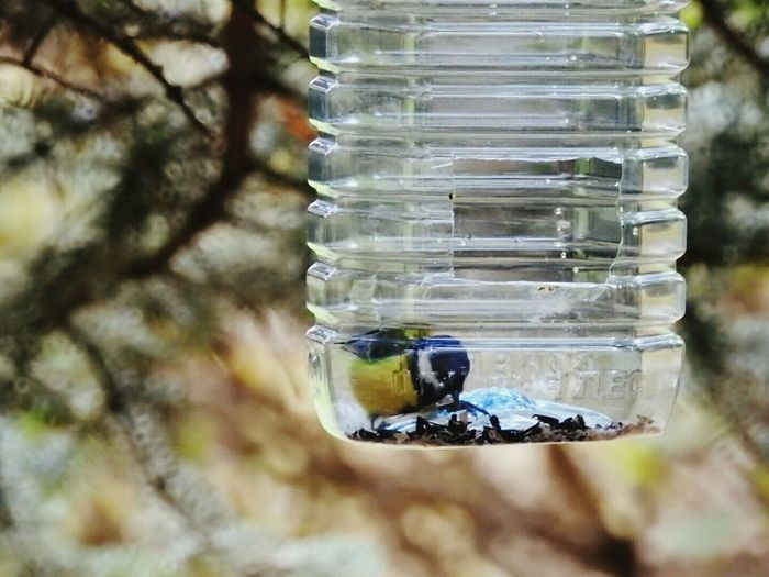 Tomtit In Bottle Focus On Foreground Bird Feeders Autumn🍁🍁🍁 Colors Of Sankt-Peterburg Walking Around Sankt-Petersburg Russia Bird Zoology Street Photography Park