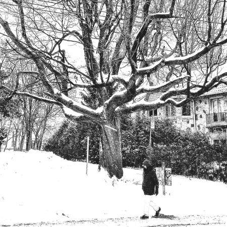 2016 is over The Week Of Eyeem Montréal Snow Streetphoto_bw Blackandwhite EyeEm Best Shots - Black + White