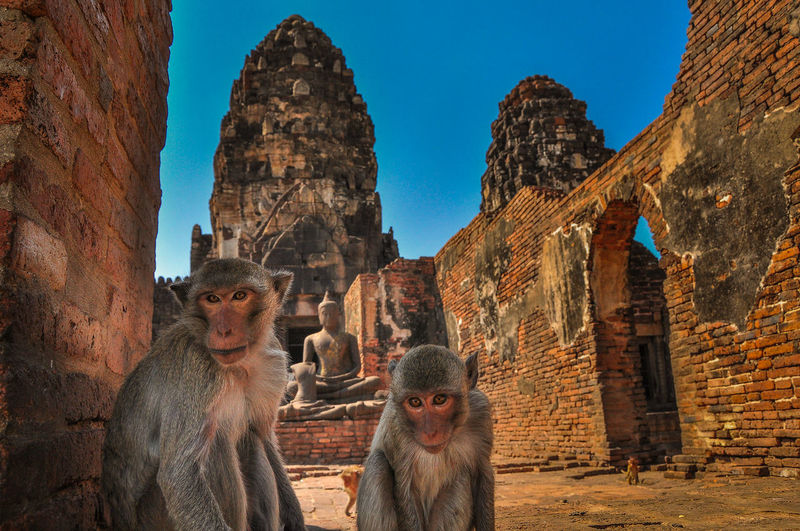 Monkeys In Ancient Temple