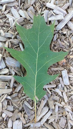 Leaf High Angle