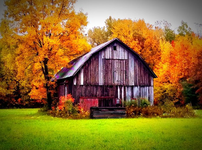 How can you not love an old barn? Barnstalker My Running View On The Road Dirt Roads Nature Hugging A Tree The Great Outdoors - 2015 EyeEm Awards Fall Beauty