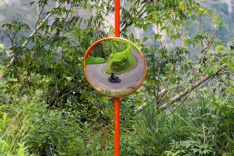 A motorbike riding round a blind bend reflected in a road side mirror. Bend Mirror Post Reflection Transportation Travel Blind Bend Curved  Day Freshness Green Color Growth Motorbike Nature Outdoors Tree