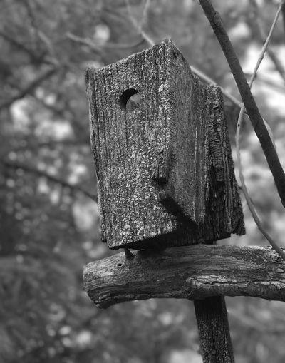 Close-up of bird on rusty tree