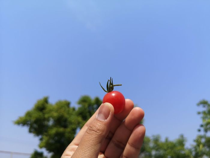Close-up of hand holding strawberry against sky