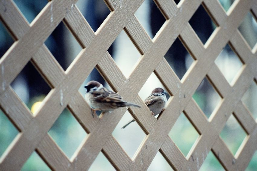 Bird Animal Themes Animals In The Wild Animal Wildlife One Animal Perching Day Outdoors No People Building Exterior Sparrow Architecture Close-up Birds Birdwatching Filmisnotdead Filmisalive Film Photography First Eyeem Photo