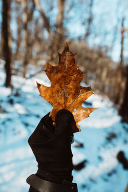 Autumn Beauty In Nature Change Close-up Cold Temperature Day Focus On Foreground Frozen Lake Leaf Lifestyles Maple Maple Leaf Nature One Person Outdoors People Real People Scenics Sky Snow Tree Water Weather Winter