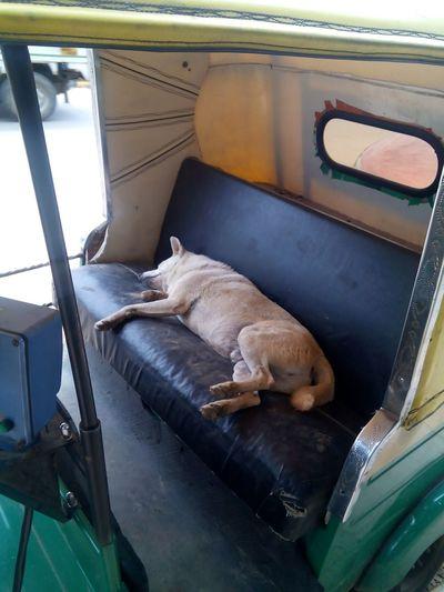 Feel free nap, dog sleeping on a parked auto First Eyeem Photo