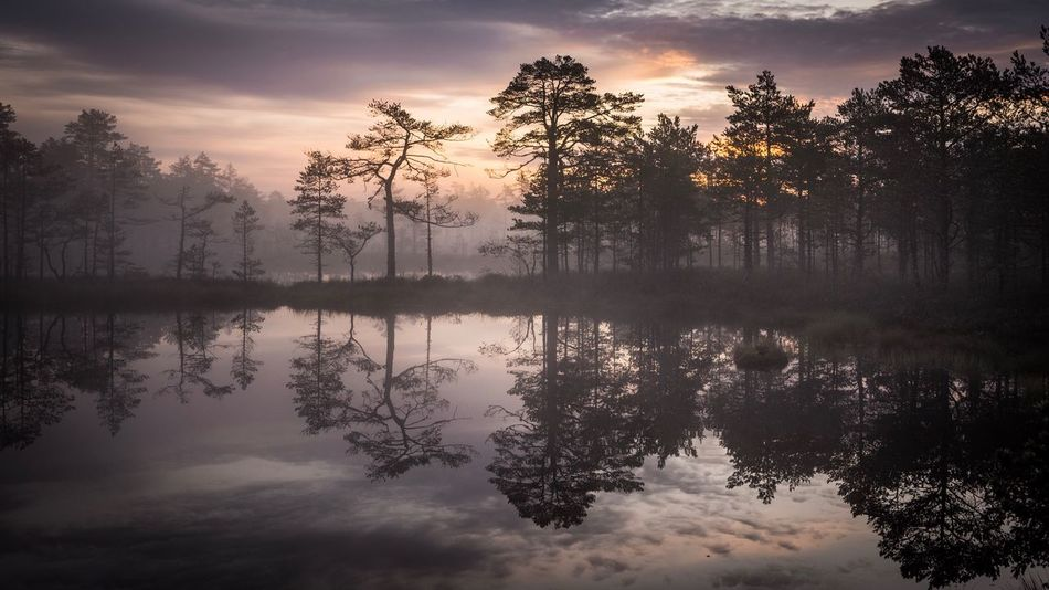 Reflection Tree Tranquil Scene Sky Water Beauty In Nature Nature Silhouette Tranquility Outdoors No People Cloud - Sky Scenics Sunrise Estonia Estonian Nature Bog