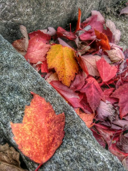 Fallen leafes... Autumn Collection Colors Of Autumn Autumn Colors Taking Photos Eyemnaturelover Herbststimmung Nature Photography Eym