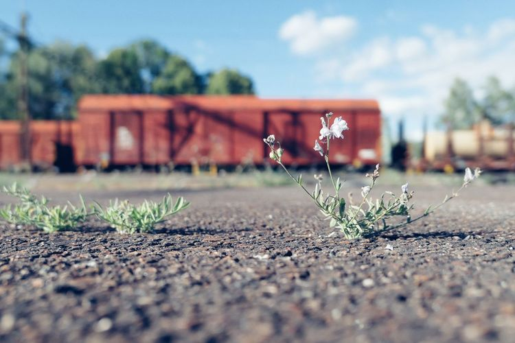 When you have to wait for the train. Niklas Storm Juni 2018 Train Train Station Sky Close-up Blooming Growing Flower Head Plant Life Vehicle The Street Photographer - 2018 EyeEm Awards The Still Life Photographer - 2018 EyeEm Awards My Best Travel Photo My Best Photo The Street Photographer - 2019 EyeEm Awards