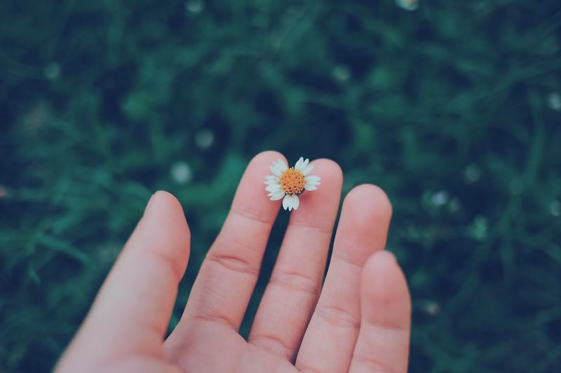 Flower Human Hand Human Body Part Real People Focus On Foreground Fragility Flower Head One Person Outdoors Plant Day Close-up Nature Beauty In Nature Freshness People EyeEm Best Shots