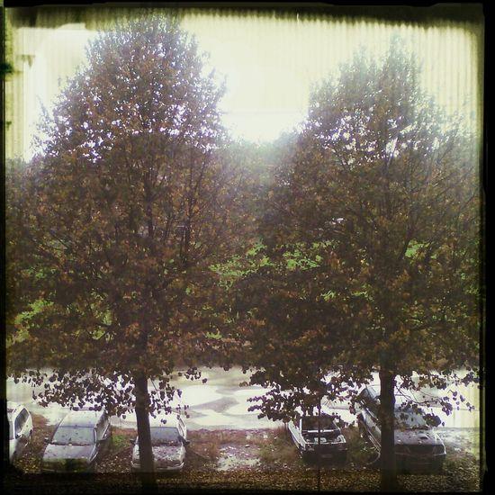 Autunno  Pioggia Pozzanghere Ottobre First Eyeem Photo