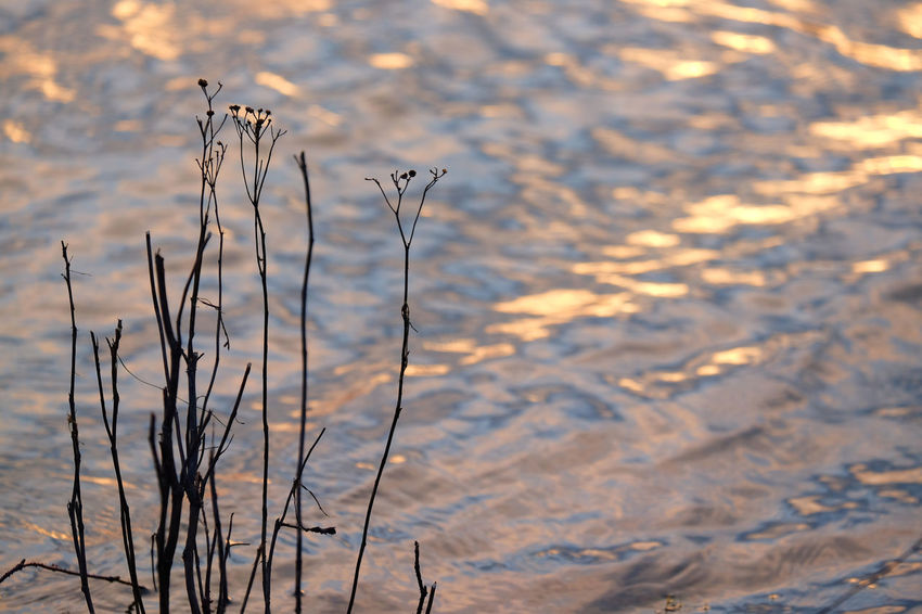 The river IJssel in Deventer, Overijssel, the Netherlands Dutch River Water Reflections Beauty In Nature Close-up Day Growth Nature No People Outdoors Plant Tranquility Water Water_collection Winter Winterimpressions