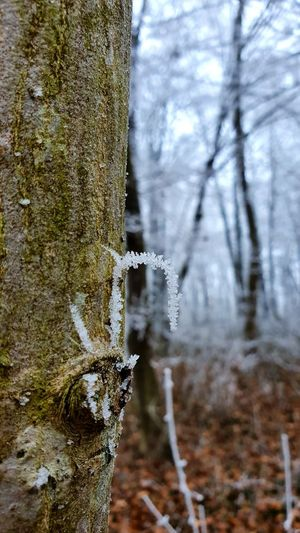 Close-up of frost on tree trunk during winter
