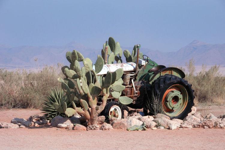 Cactus plants on desert against clear sky
