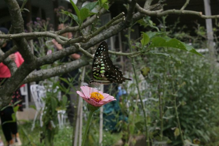 Butterfly Flower Butterfly And Flowers Garden Nature Nature Photography Canon Eos 1100 D