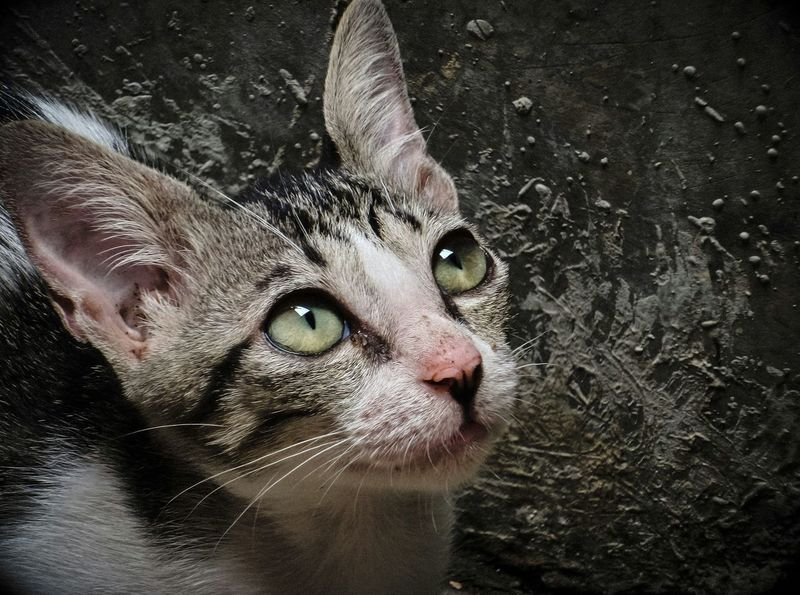 The best is yet to come... Homeless Cats Cat Pets Corner Cute Pets Animals From My Point Of View EyeEm Animal Lover