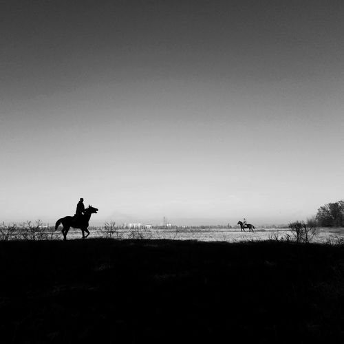 Silhouette man riding horse on field against clear sky
