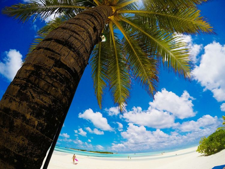 palm and colors Tree Palm Tree Sky Outdoors Nature Blue Beauty In Nature Finding New Frontiers Front View Vacations Sand Tranquility Romance Maldivesmale Maldivesbeach