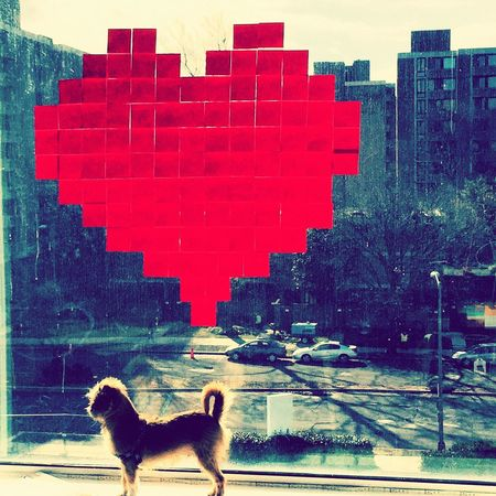 Postitart Post It Notes Postits Postit Post It PostitDC Littledogbigworld Love Valentine Post Its SW DC Washington, D. C. IMPei Everydayimbrusseling Brusselsgriffon AdoptDontShop Publicart
