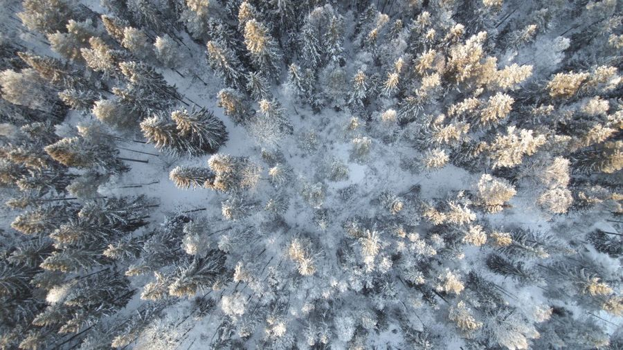 Winter Aerial Shot Aerial View Backgrounds Beauty In Nature Cold Day Drone  Dronephotography Frozen Frozen Nature Full Frame High Angle View Nature Nature Photography No People Outdoors Snow Sweden Sweden Nature Taiga Trees Winter