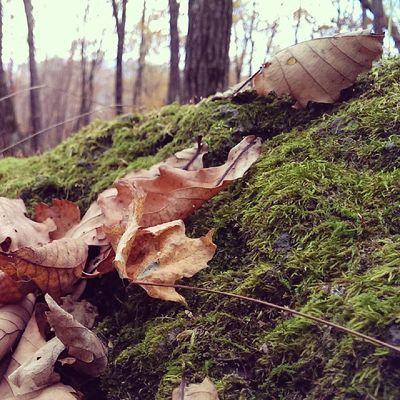 осень однако