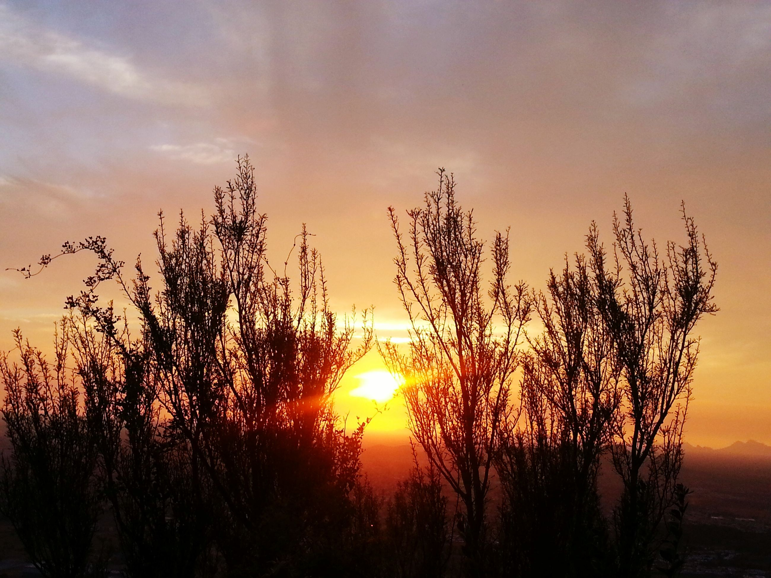 sunset, silhouette, tranquil scene, tranquility, beauty in nature, scenics, sky, orange color, bare tree, sun, tree, nature, idyllic, cloud - sky, branch, growth, landscape, dramatic sky, outdoors, plant