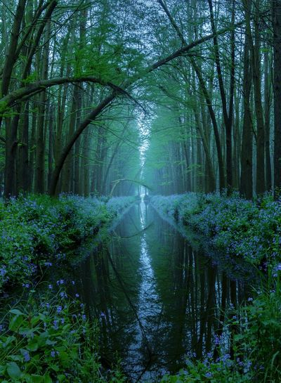 童话森林 Tree Plant