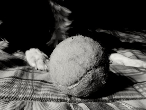 Blackandwhite Light And Shadow Day Black & White No People Silhouette Black Background Light Tranquility Indoors  Ball Dog Love Pet Toys MyGIRL