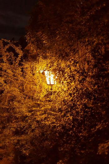 Illuminated trees on field at night