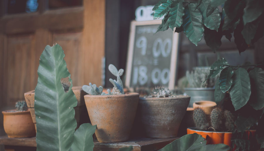 Potted plants for sale