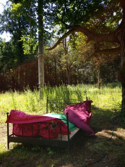 No People Sunlight Nature Growth Grass Outdoors Tranquility Sommergefühle Breathing Space Scenics Beauty In Nature Bed In Forest Bed Pillows And Blankets Red Red Bed Romantic Scenery Romantic Place Abandoned Places Magic Forest Rethink Things
