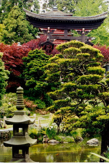 Getty Images Pixelgirl TRENDING  Japanese, Garden, San Francisco, Gardens