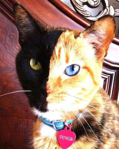 Catdammit Cats Of EyeEm Lovelovelove Unique Beauty Cooolio` The Cat