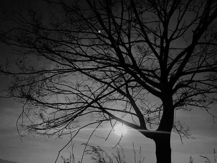 Tree Plant Sky Branch Beauty In Nature Low Angle View Nature Silhouette Tree Trunk Dusk Day