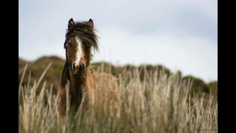 Capture The Moment Wildlife Wildhorses Wales Nationalpark Snowdonia Carneddau First Eyeem Photo